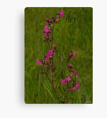 Red Campion in Burntollet Woods Canvas Print