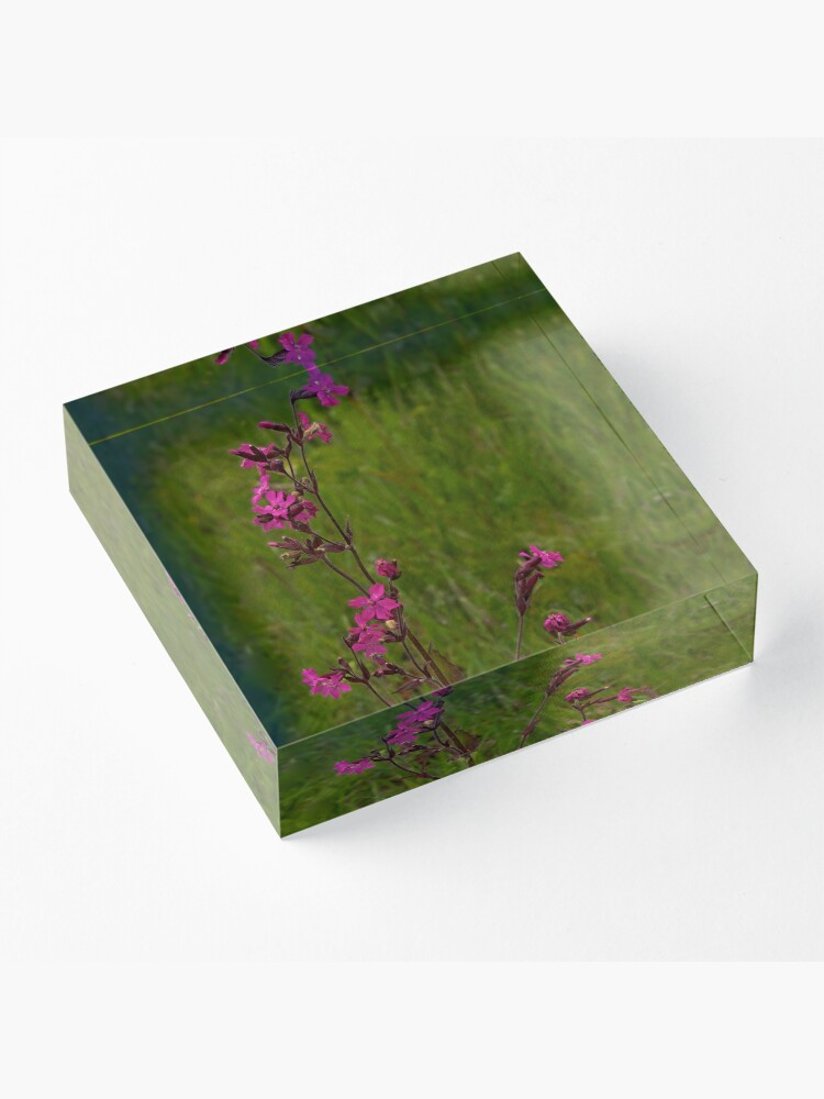 Alternate view of Red Campion in Burntollet Woods Acrylic Block