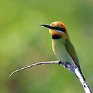 Merops ornatus by Simon Muirhead