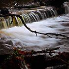 Tarkine Stream 1 by Andrew Smyth