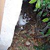 Peeking around corner by icesrun