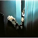 Let Me In! by Mark Ross