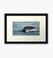 sperm whale  Framed Print