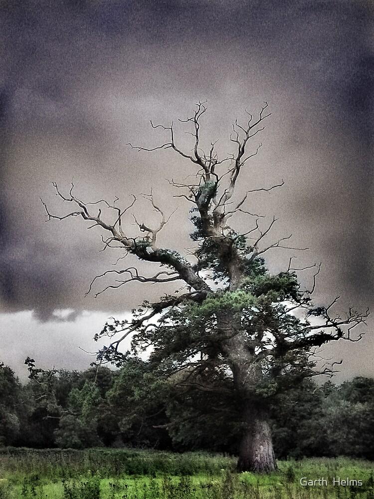 Old Tree, Killarney National Park by Garth  Helms