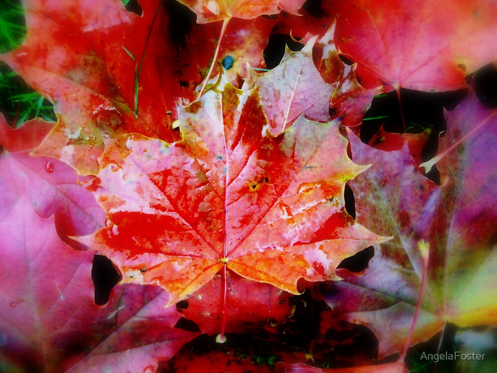 Vibrant Maples by AngelaFoster