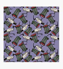 Bin Chicken - Purple Photographic Print