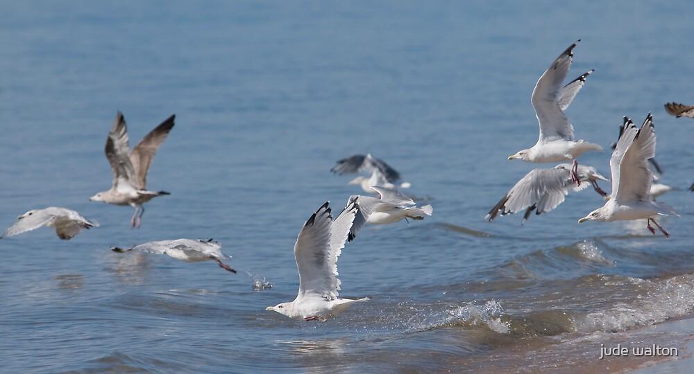 taking flight by jude walton