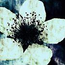 Dark Blue by Anne Staub