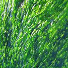 Green Algae and Water Bubbles by Honor Kyne