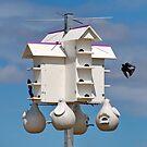 Bird House & Tenants  by AnnDixon