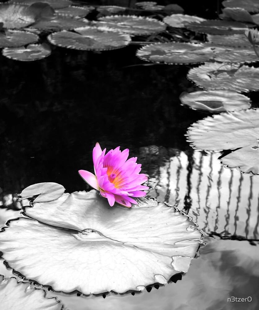 Bloom by n3tzer0