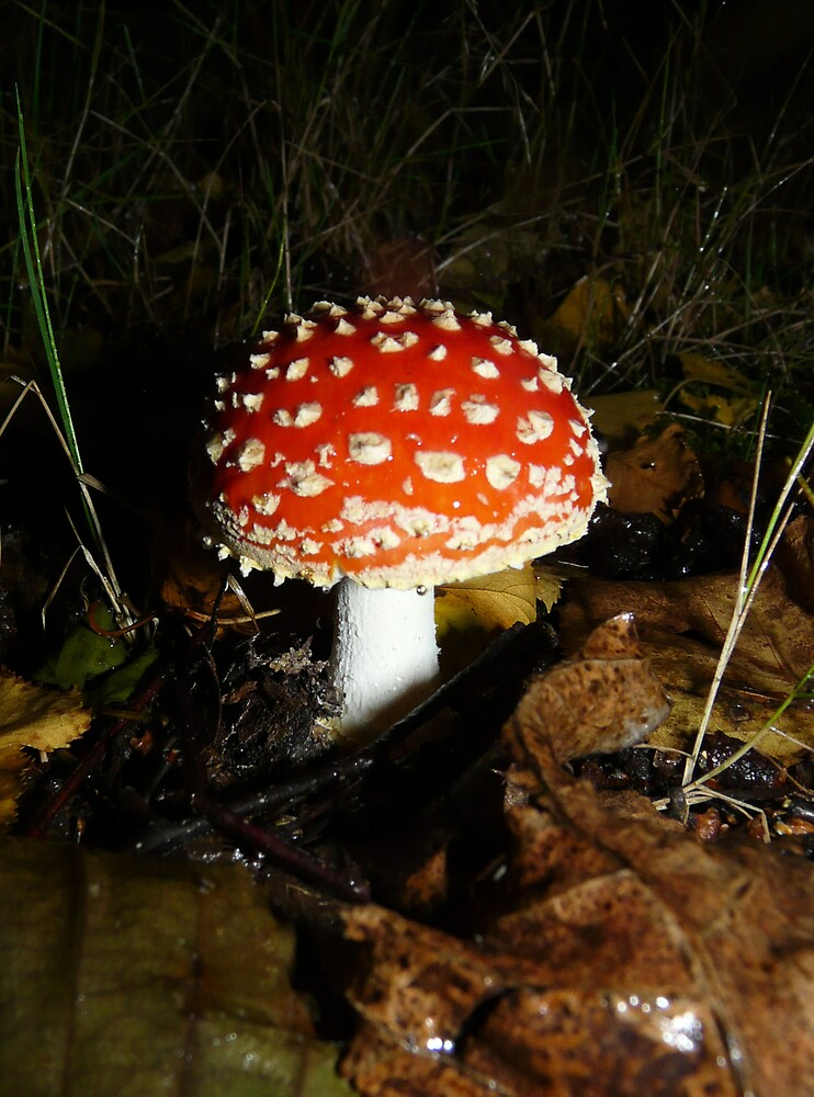 Magic Mushroom by satterflOw