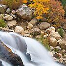 Golden Falls by Gary Lengyel