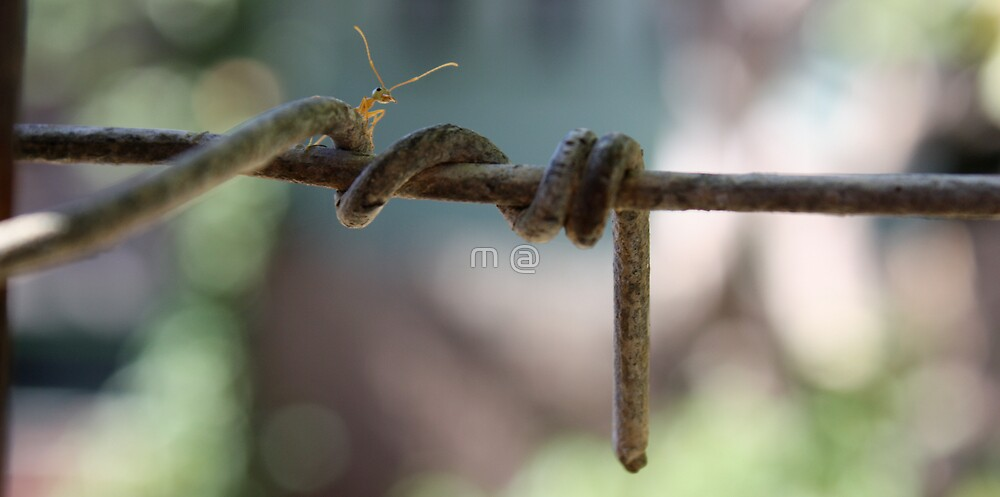 Ant Explora by The Mattmosphere