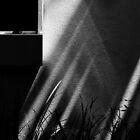Black Window ... by Angelika  Vogel