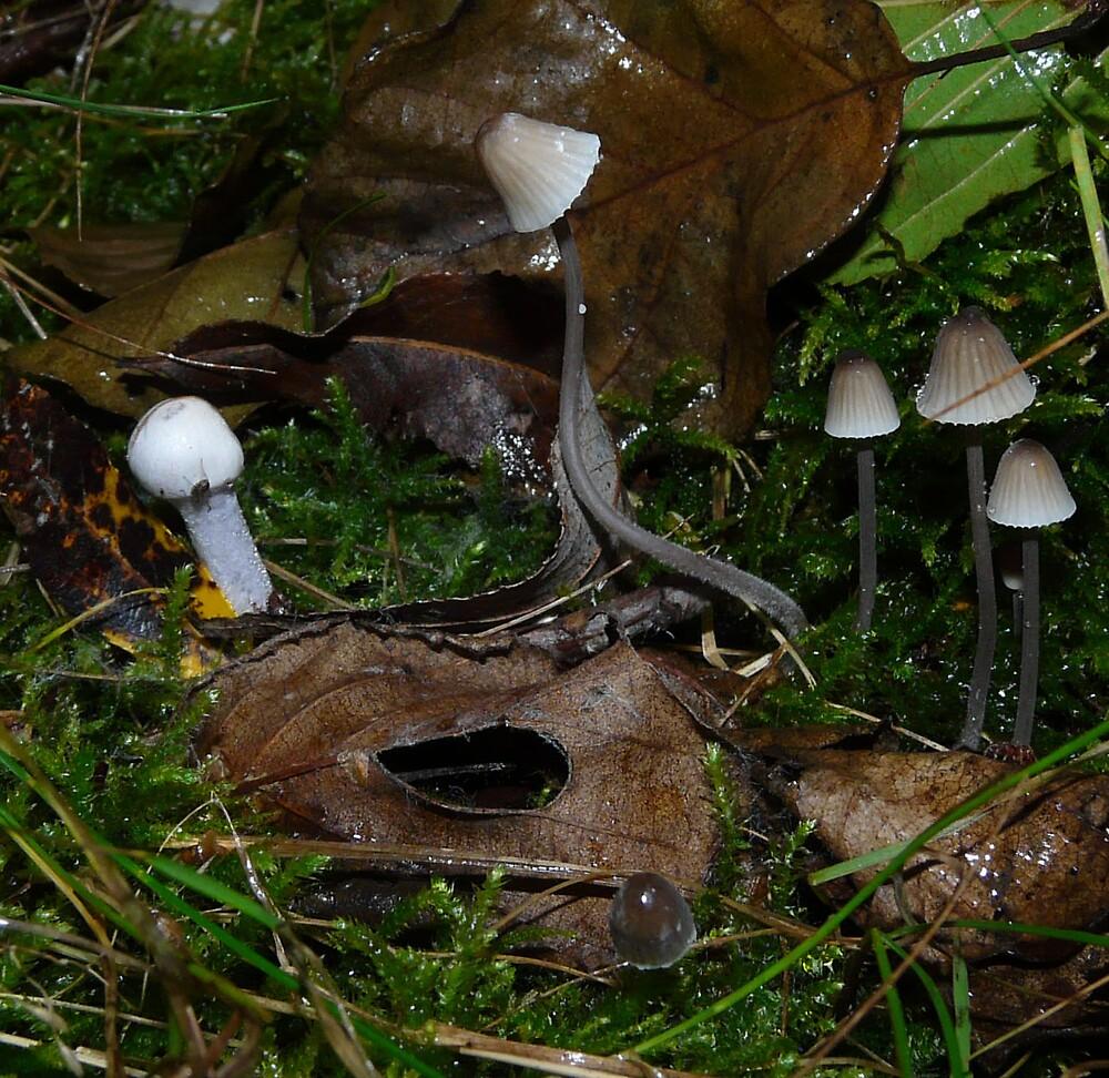... Mushrooms meeting point ... by satterflOw
