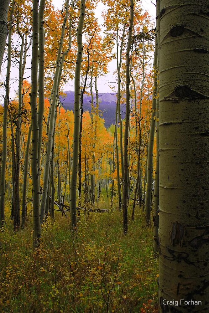 Silverthorne Colorado by Craig Forhan