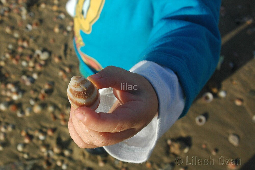 Shell by lilac
