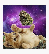 Space kitten  Photographic Print