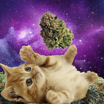 Space stoner kitten  by kushcoast