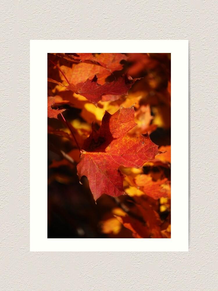 Alternate view of Autumn Maple Art Print