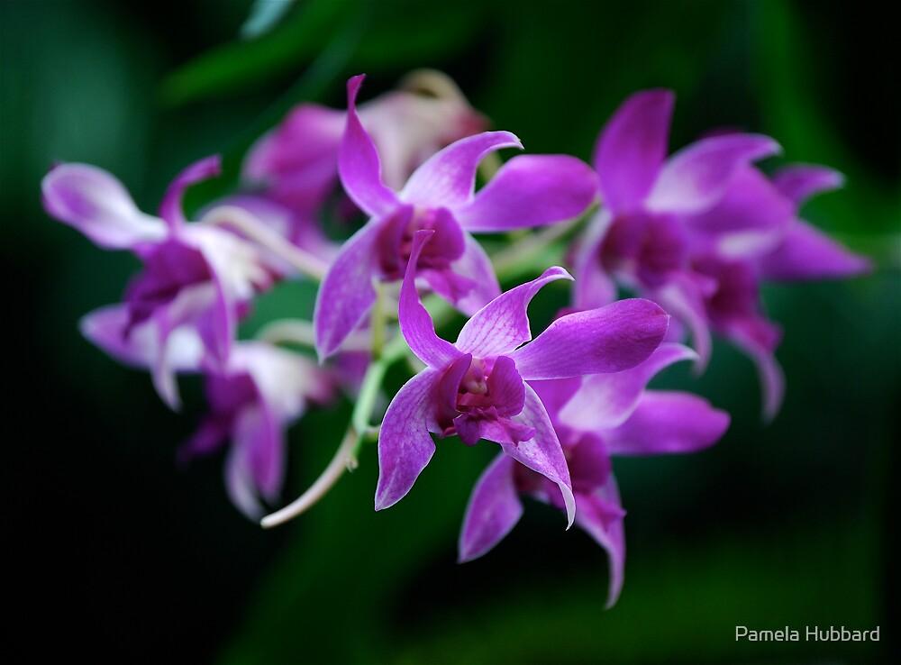Tropical Flowers 3 by Pamela Hubbard