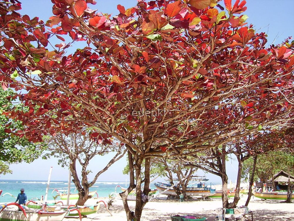 Tree Bursting with Color by edenkl