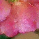 Rose Petals by Eileen McVey