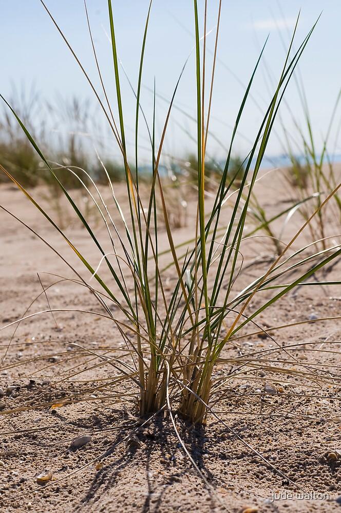 beach grasss by jude walton