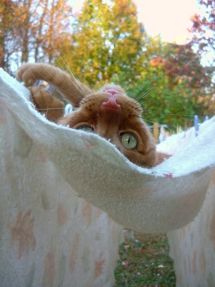 Upside Down Kitty in a Hammock by Vivian Eagleson