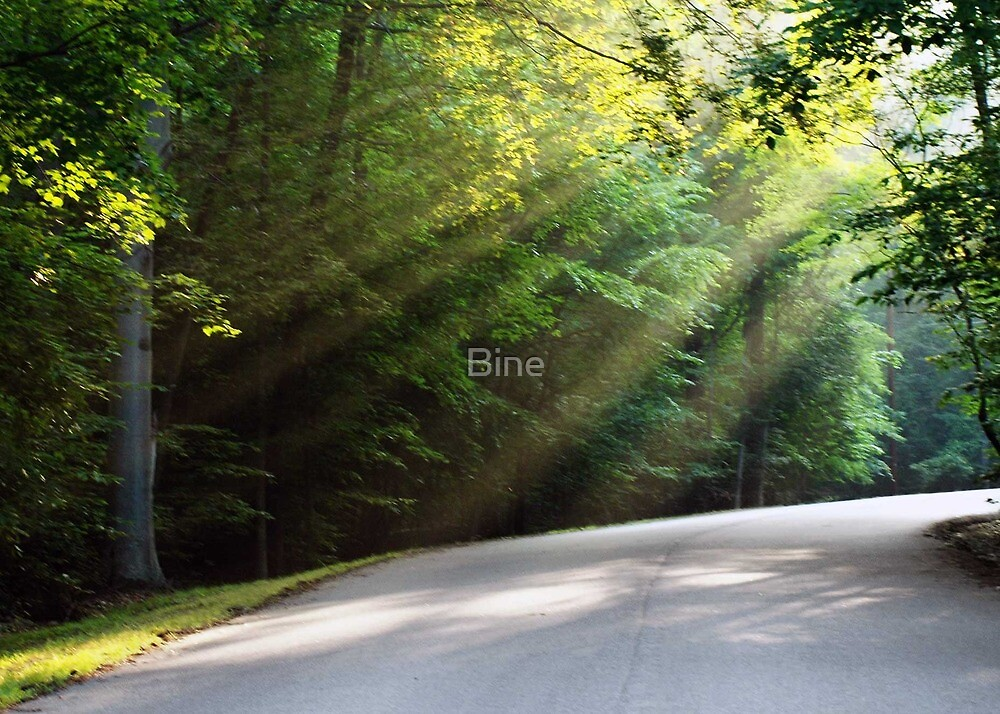 Street through the Morning Forest by Bine