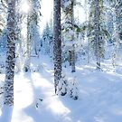 Sun Peeks Through Snowy Trees in Nature's Forest by Melissa J Barrett