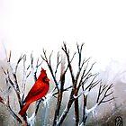 Cardinal.. by ©Janis Zroback
