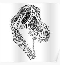 Black Calligram Tyrannosaur Skull Poster