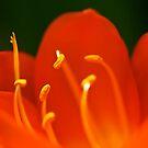 Le orange-rouge by engride