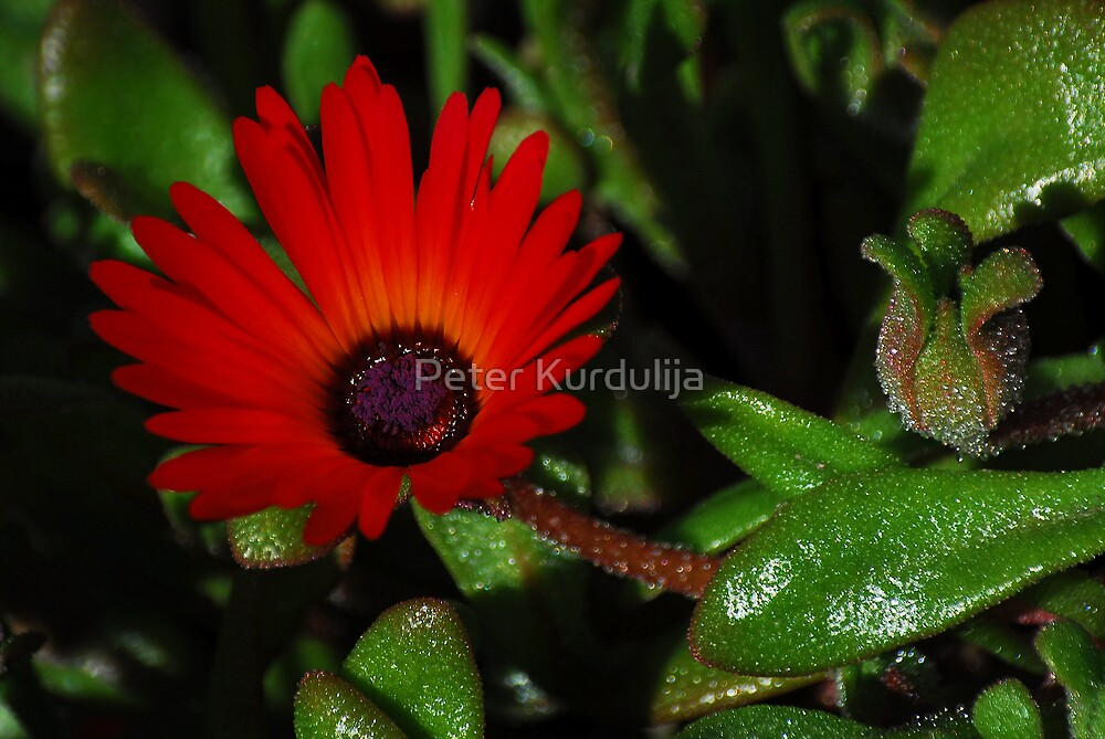 Red and Green by Peter Kurdulija