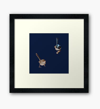 Superb Fairy-wrens male and female Framed Print