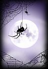 along came a spider... by dimarie