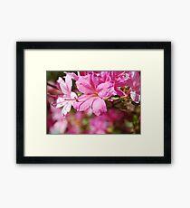 Rhododendrum Framed Print