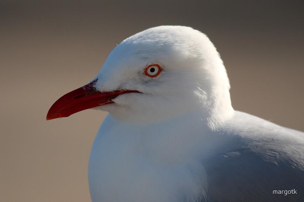Seagull by margotk