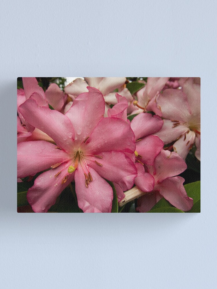 Alternate view of Pink Rhododendron from A Gardener's Notebook Canvas Print