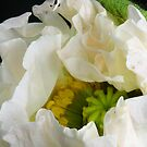Mohn White by SmoothBreeze7