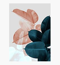 Blush Pink Plant Leaves, Botanical Leaf Photographic Print