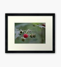 Wild Rasberry Framed Print
