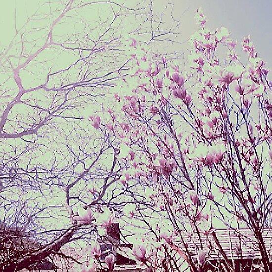 Wildblumen von DaniLebo