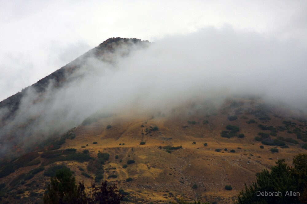 Misty Hillside by Deborah  Allen