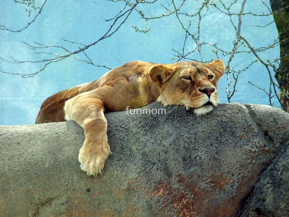 Lion Around by funmom
