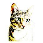 cat by Falko Follert