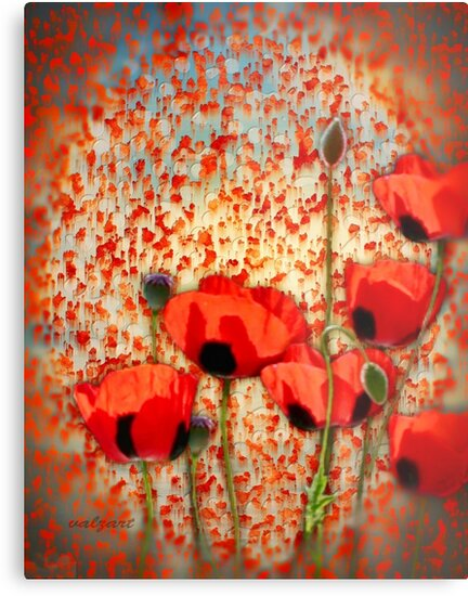 Flanders fields  by Valerie Anne Kelly