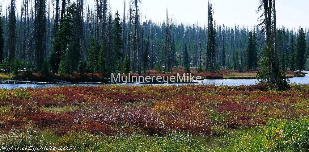 #569   Yellowstone Scenery by MyInnereyeMike
